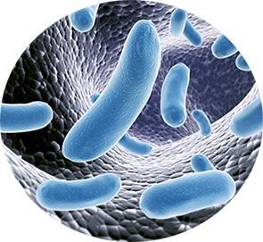 Depositphotos_5385521_Bakterien-klckZ8Mm4P8EOm4
